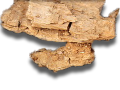 Représentation d'un morceau de bois bati avec des champigon
