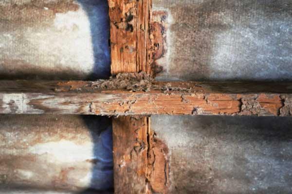 Représenation d'une structure ne bois altéré par des champignons